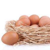 Shoot macro des œufs bruns au nid de foin dans l'élevage de poulets, isolé — Photo