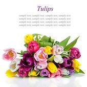 Ramo de tulipanes hermosos aislado sobre fondo blanco — Foto de Stock