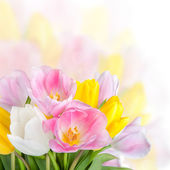 Beautiful spring tulips flowers — Stock Photo