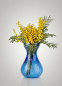 Bouquet of yellow mimosa acacia flowers in blue glass vase isola — Stock Photo