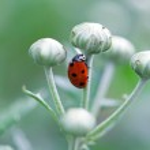 Ladybug running along on blade of green grass — Stock Photo #35983215