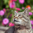 Stock Photo: Cat outside with Fall color background. Tight depth of field, highlighting cat's eyes and nose area.