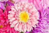 Macro of Chrysanthemum Flower Purple — Stock Photo