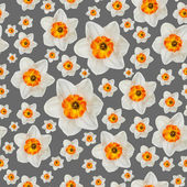 White narcissus flower seamless background pattern — Stock Photo