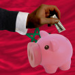 Dollar into piggy rich bank and  national flag of morocco -  