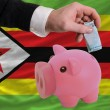 Funding euro into piggy rich bank national flag of zimbabwe - Stock fotografie