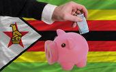 Funding euro into piggy rich bank national flag of zimbabwe — Стоковое фото