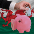 Funding euro into piggy rich bank national flag of wales - Stock Photo