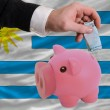 Funding euro into piggy rich bank national flag of uruguay - Stock Photo