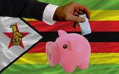 Funding euro into piggy rich bank national flag of zimbabwe — Stock Photo