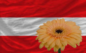 Gerbera flower in front national flag of austria — Stock Photo