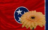 Gerbera blomma framför flagga amerikanska staten tennessee — Stockfoto