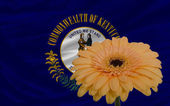 Gerbera flower in front flag of american state of kentucky — Stock Photo