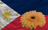 Gerbera fleur devant drapeau des philippines — Photo