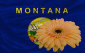 Gerbera flower in front flag of american state of montana — Stock Photo
