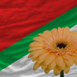 Stock Photo: Gerberflower in front national flag of of katanga