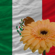 Stock Photo: Gerberflower in front national flag of mexico