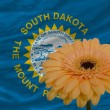 Gerbera flower in front flag of american state of south dakota — Stock Photo