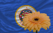 Gerbera flower in front flag of american state of minnesota — Stock Photo