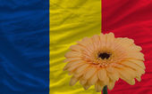 Gerbera flower in front national flag of romania — Stock Photo