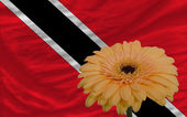 Gerbera flower in front national flag of trinidad tobago — Stock Photo
