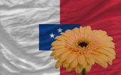 Gerbera flores bandeira na frente nacional de franceville — Fotografia Stock