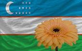Gerbera flor bandera en el frente nacional de uzbekistán — Foto de Stock