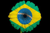 Gerbera daisy flower in colors national flag of brazil on bl — Stock Photo
