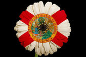 Gerbera daisy flower in colors flag of american state of florid — Stock Photo