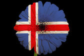 Gerbera daisy flower in colors national flag of iceland on b — Stock Photo