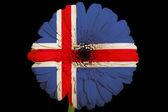 Gerbera gänseblümchen-blume in farben nationalflagge von island auf b — Stockfoto