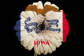 Gerbera daisy flower in colors flag of american state of iowa — Stock Photo