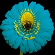 Stock Photo: Gerberdaisy flower in colors national flag of kazakhsto