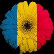 Stock Photo: Gerberdaisy flower in colors national flag of romanion b