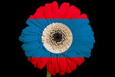 Flor de la margarita de gerbera en bandera nacional colores de laos en blac — Foto de Stock