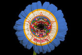 Gerbera daisy flower in colors flag of american state of minnes — Stock Photo