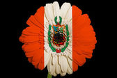 Gerbera daisy flower in colors national flag of peru on blac — Stock Photo