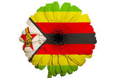 Gerbera daisy flower in colors national flag of zimbabwe on wh — Stock Photo