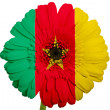 Gerbera daisy flower in colors national flag of cameroon   on wh — Stock Photo
