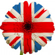 Gerbera daisy flower in colors national flag of united kingdom — Stock Photo