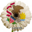 Gerbera daisy flower in colors flag of american state of illinoi — Stock Photo #24818569