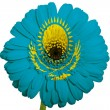 Royalty-Free Stock Photo: Gerbera daisy flower in colors national flag of kazakhstan   on