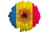 Gerbera daisy flower in colors national flag of andorra on whi — Stock Photo