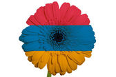 Gerbera daisy flower in colors national flag of armenia on whi — Stock Photo