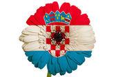 Gerbera stokrotka kwiat w kolorach flagi narodowej chorwacji na whi — Zdjęcie stockowe
