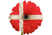 Gerbera daisy flower in colors national flag of denmark on whi — Stock Photo