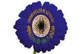 Gerbera stokrotka kwiat w kolory flagi państw amerykańskich kentuck — Zdjęcie stockowe