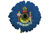 Gerbera daisy flower in colors flag of american state of maine — Stock Photo