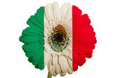 Gerbera daisy flower in colors national flag of mexico on whit — Stock Photo