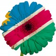 Gerbera daisy flower in colors national flag of namibia   on whi — Stock Photo